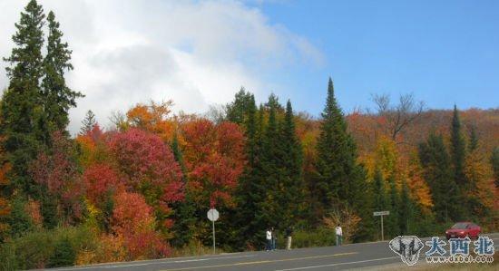 四,秋天的加拿大安省       五,瑞士瓦莱州葡萄园的秋天   六,荷兰