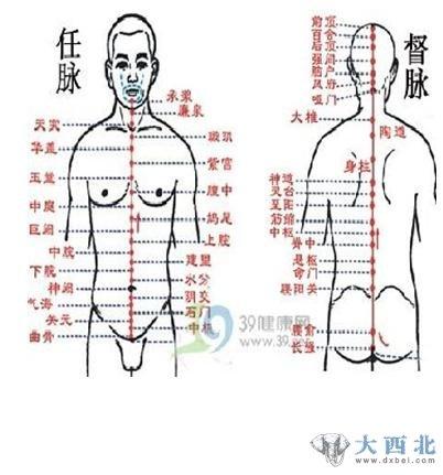 任脉的起始位置图解