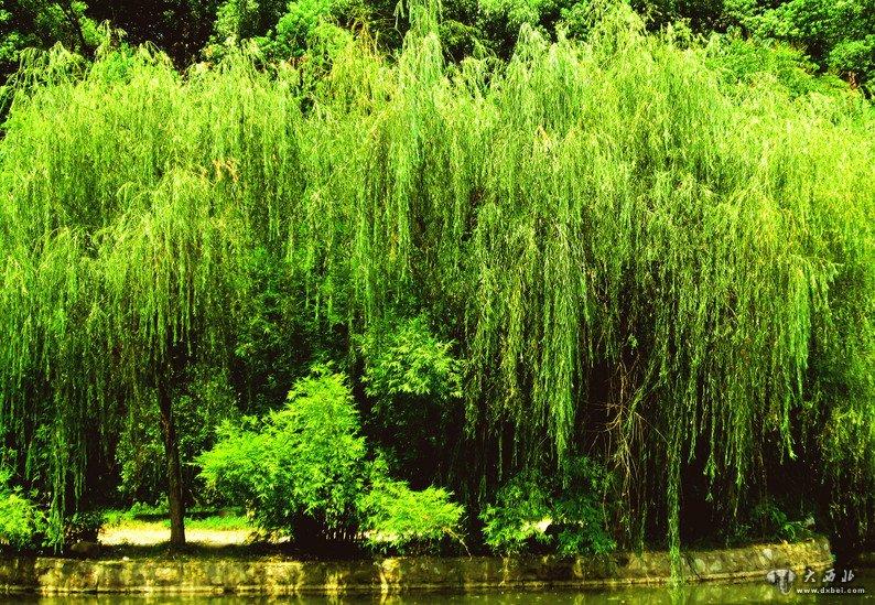 小河边,杨树,柳树的枝条渐渐地由深青变得草青,直逼你的眼,嫩嫩的树芽