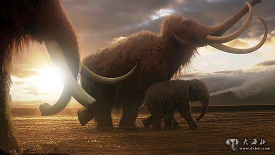 壁纸 大象 动物 550_310