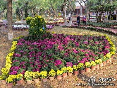 长假期间 兰州植物园将举办迎国庆菊花展  兰州市美术书法摄影作品晋