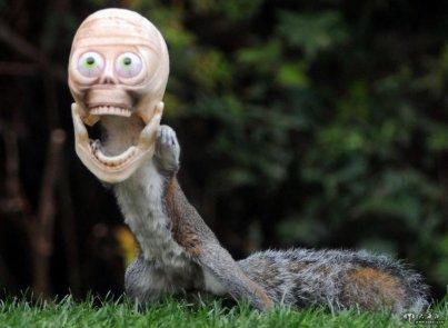 搞笑 谷歌/[科技新闻] 英松鼠万圣节也疯狂:戴鬼面具效果搞笑日期:2013/...
