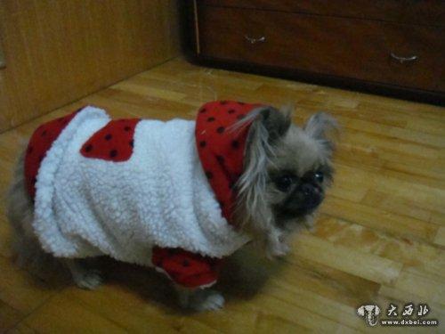 小动物就没有必要穿衣服