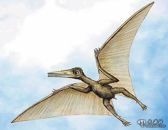 翼手龙想象图   新华社专电 路透社24日援引多名科学家的话报道,研究人员近期在中国西北戈壁地区发现一种可飞行爬行动物的化石。这一新物种的发现有可能填补远古生物进化研究中的一段空白。   报道说,依据化石判断,这种动物可飞行,翼展大约1.3米,个头中等,生活在距今1.