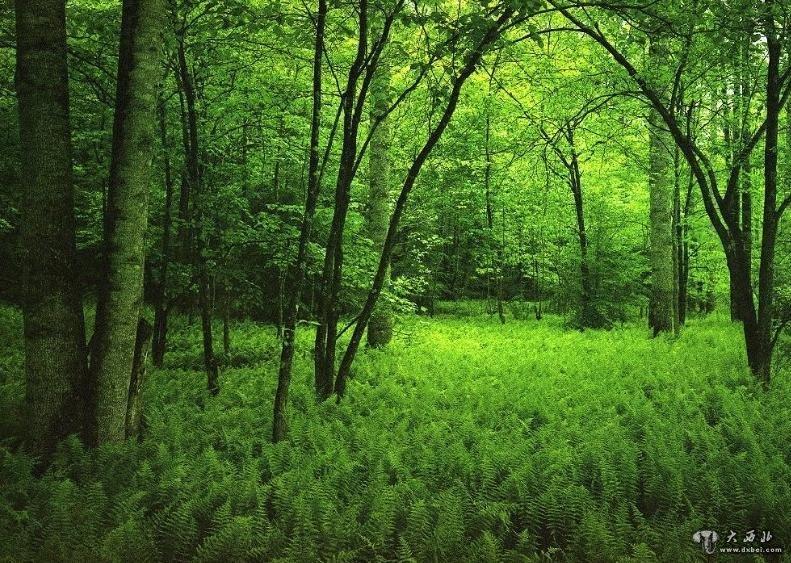 高清傍晚森林照片1920