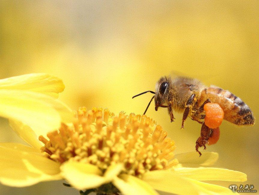 蜜蜂demo民谣吉他谱