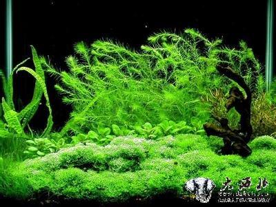 手绘藻类植物立面图