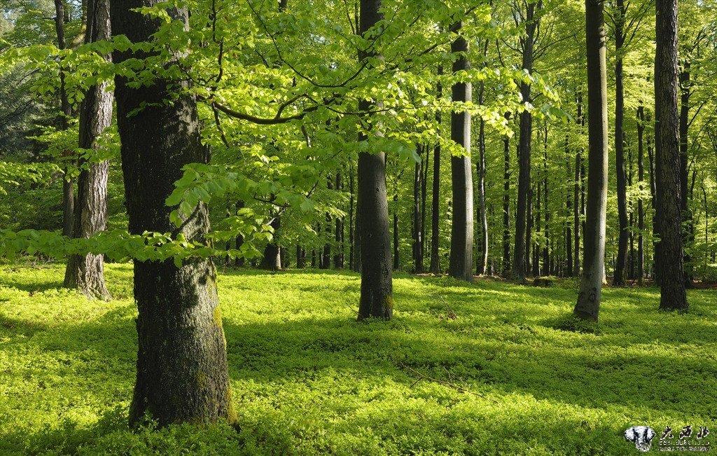 森林风景资源分布