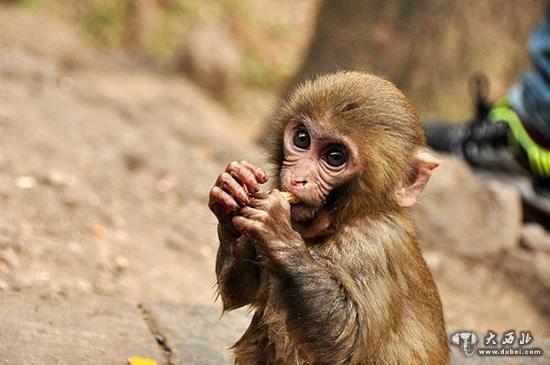 男子买猕猴当宠物 因非法收购濒危野生动物获刑
