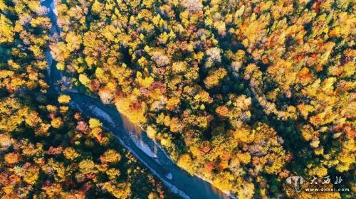 资料图:吉林省长白山林区,老白山风景区茂密秋季森林林海,五彩