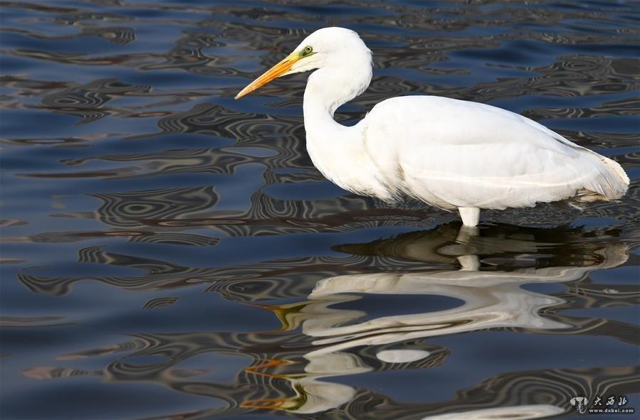兰州:冬日黄河水鸟嬉戏